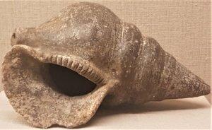 conch_vessel_ancient_akrotiri_museum_of_prehistoric_thera