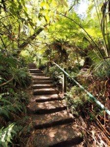 1000 steps walk dandenongs