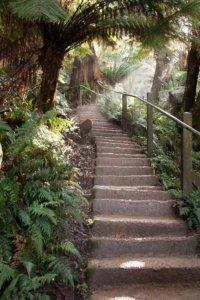 view up 1000 steps walk dandenongs
