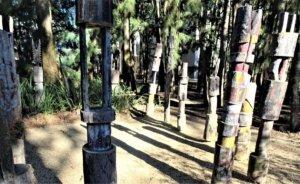 canberra gardens: pukamani poles