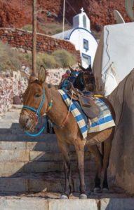 your-trip-to-santorini-donkeys