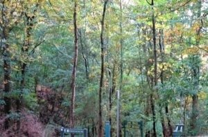Emerald_Park_walks