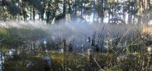 Discover Canberra's Hidden Sculpture Garden