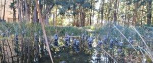 garden face statues: canberra's hidden sculpture garden