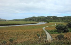 Princeton wetlands boardwalk near the great ocean road 12 apostles