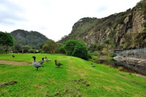 where to stay on the Great Ocean Road - Kennett River reserved park