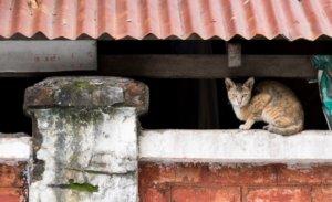 Yangon down town cat