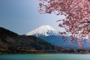 Mt. Fuji with cherry blossom in Japan