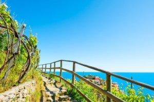 Pathway in vineyards cinque terre italy