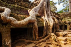 Ruins of Ta Prohm Temple at Angkor, Siem Reap, Cambodia