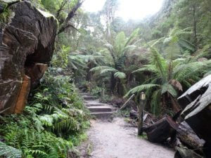 1000 steps dandenong