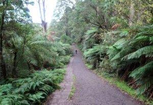 Lyrebird track 1000 steps dandenong