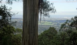 view from 1000 steps dandenongs